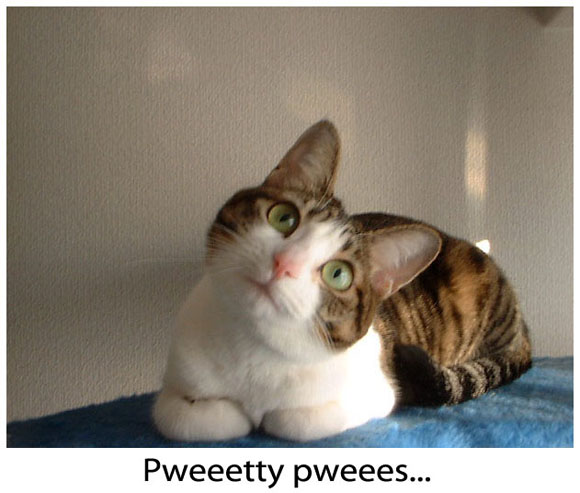 Kitty Begging