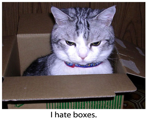 Grumpy Kitty in a Box