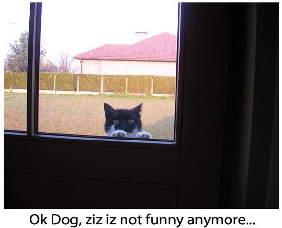 Bad Joke from a Dog