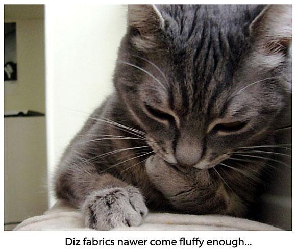 Cat Examining the Fabric