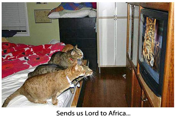 Cats Staring at the Screen