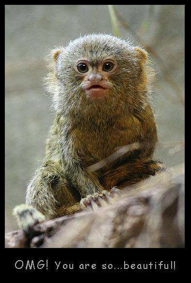 Weird Monkey