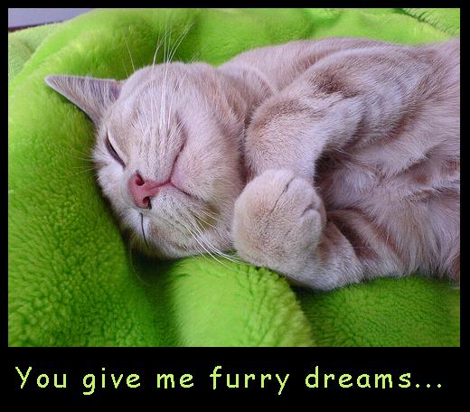 Furry Dreams