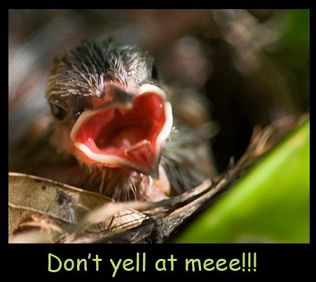 Yelling Baby Bird