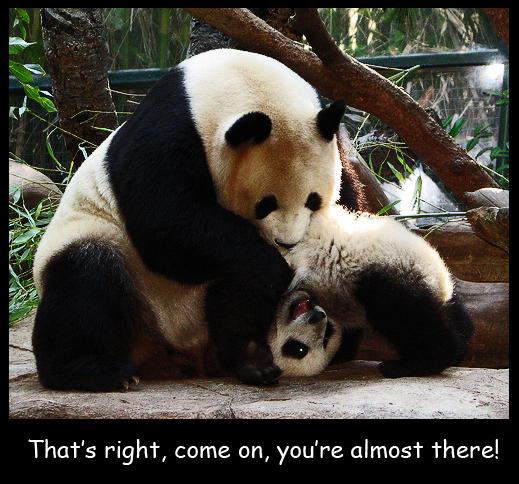 Sporty Panda