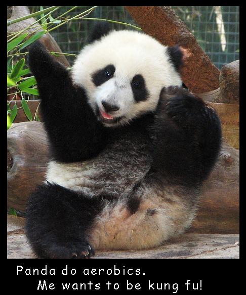 Fit Panda