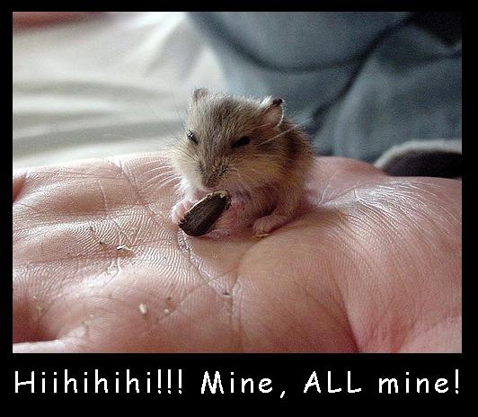 Seed Eating Hamster