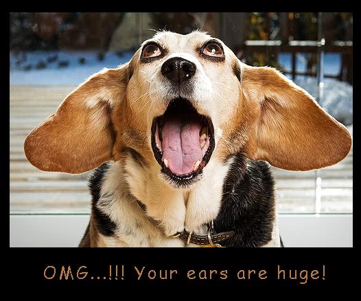 Huge Ears