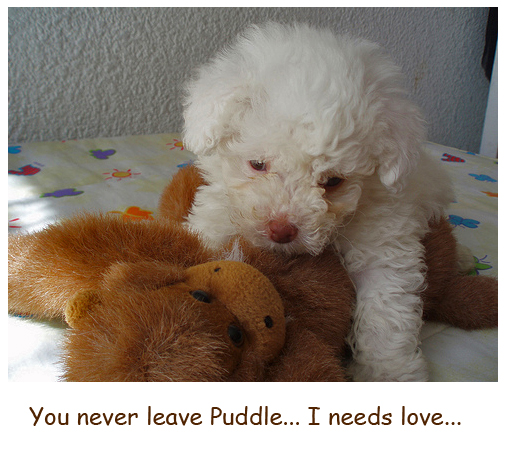 Puddle Love