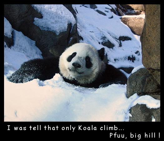Climbing Panda