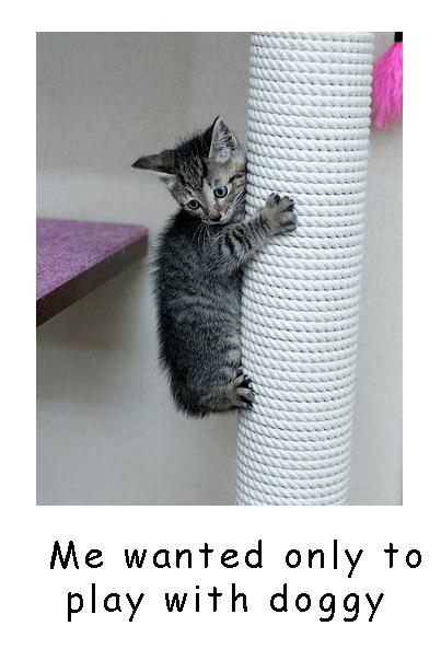 Climbing Kitty