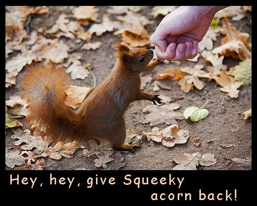 Squirrel wanting acorn