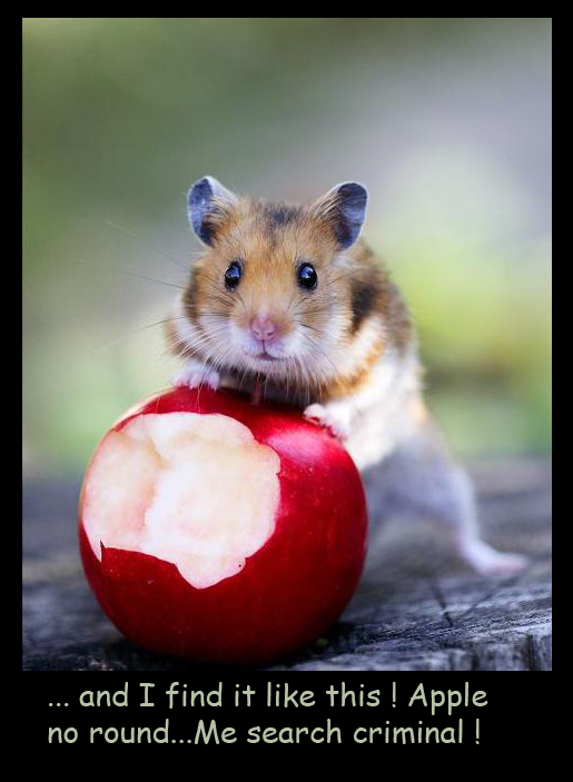 Hamster with Red Apple