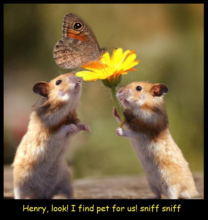 Hamster Gift