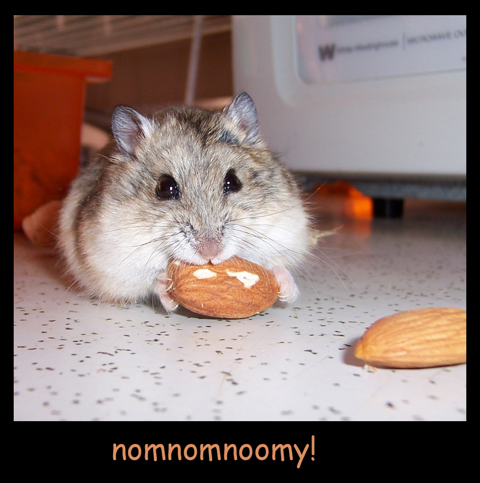 Almond Eating Hamster