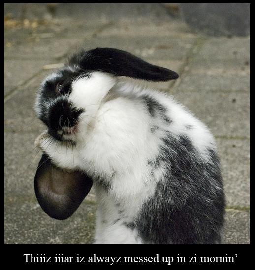 Bunny Arranging Ear