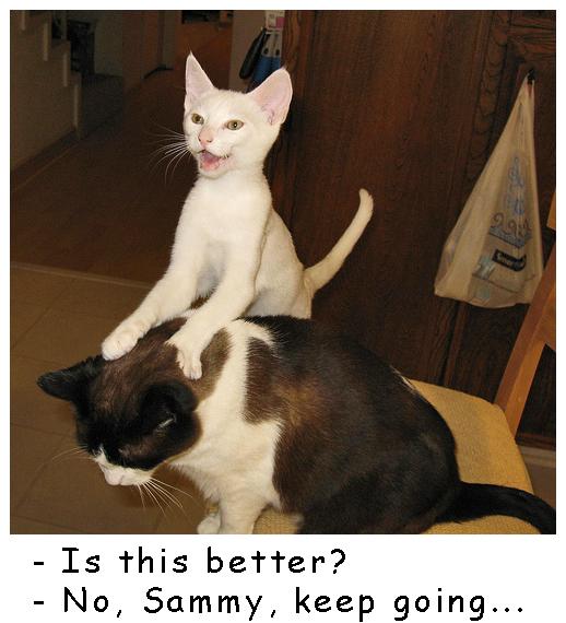Massage Kitty