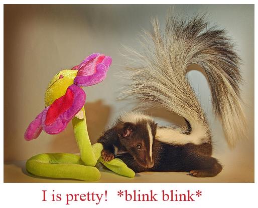Pretty Skunk