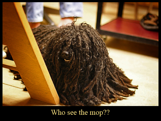 Mop Doggy
