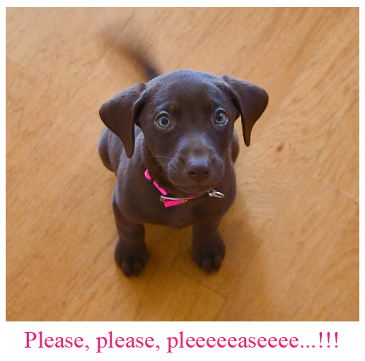 Begging Doggy [adorable picture]
