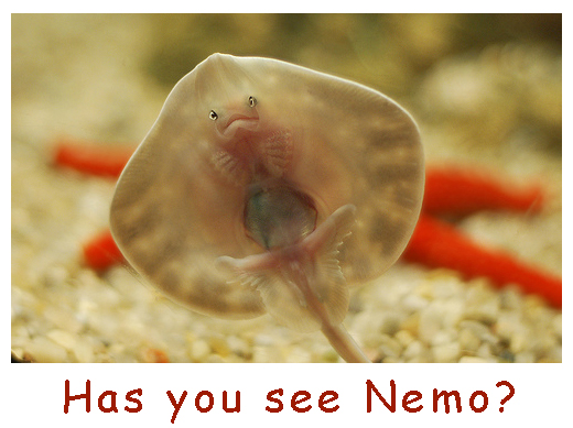 Looking for Nemo