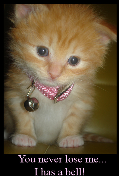 Kitten with a Bell