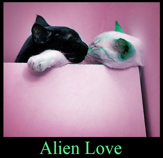 Alien Kitty Love