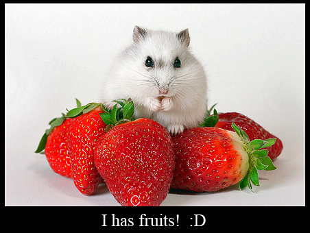 Hamster with Strawberries