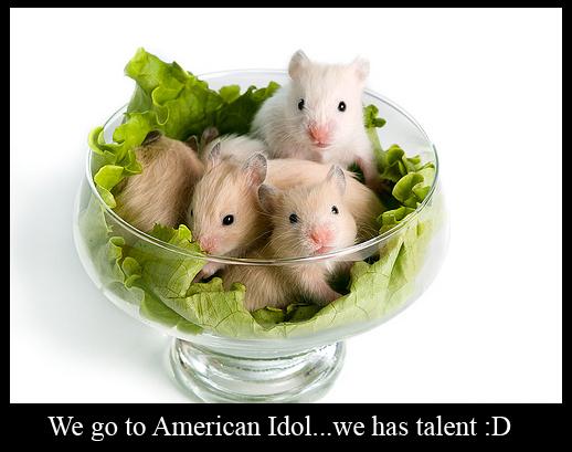 American Idol Hamsters