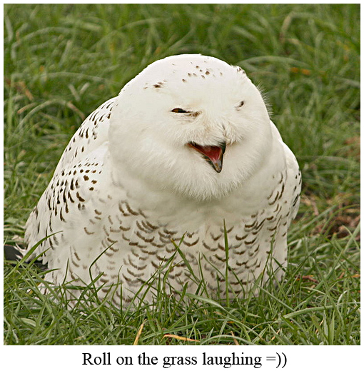 Roll on the Grass Laughing Owl
