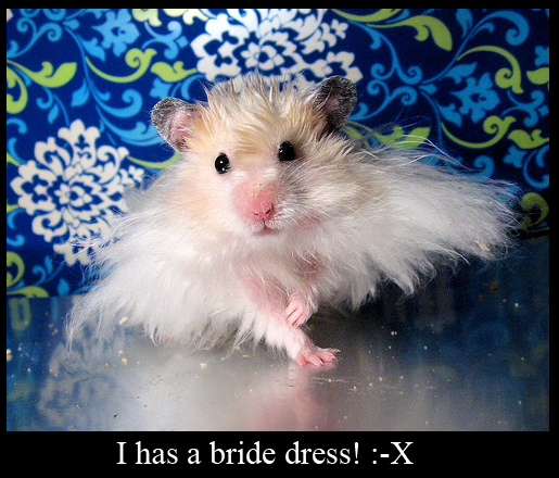 Hamster Getting Married