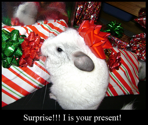 White Chinchilla Present