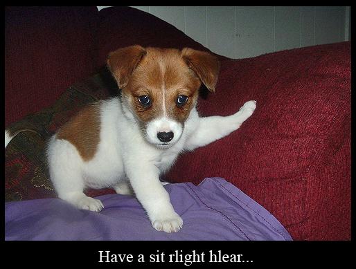 Polite Puppy