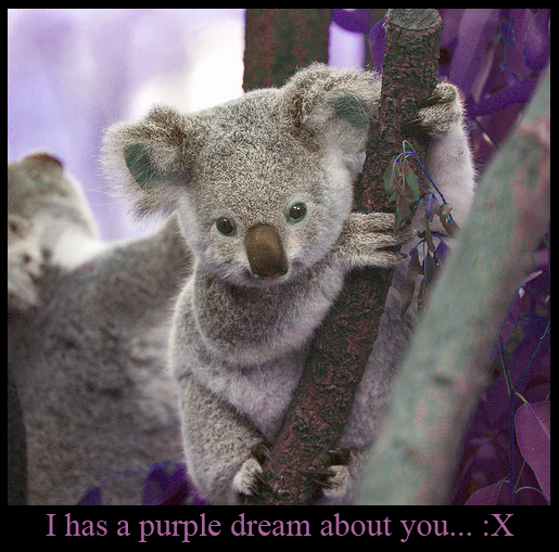 KoalaPurple Dream
