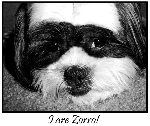 Zorro Doggy