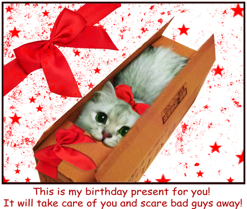 Kitten as a Birthday Gift