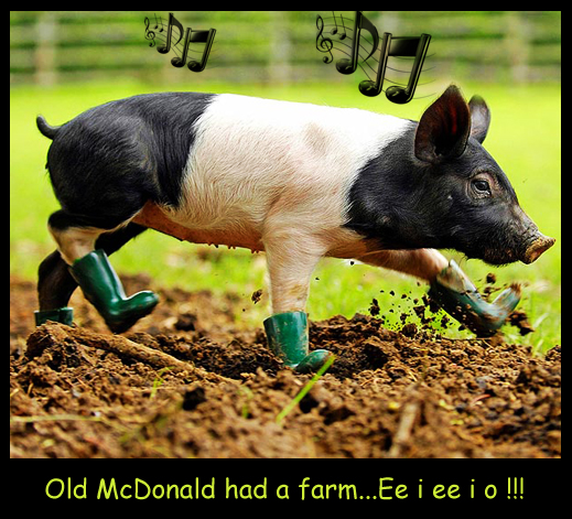 Old McDonald Had a Piggy...