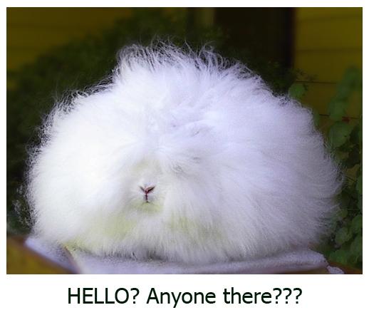 "Very Fluffy Bunny Very Fluffy Bunny """