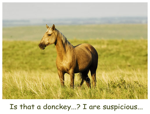 Suspicious Horse
