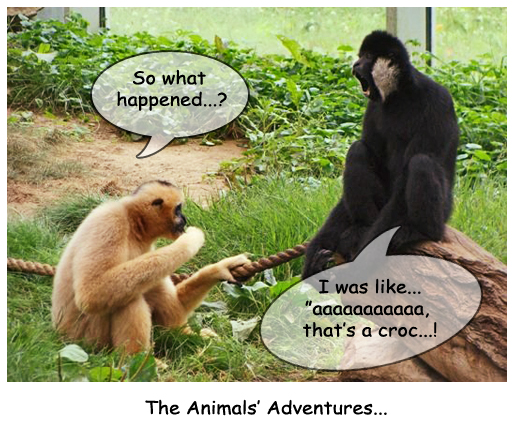 The Monkey's Adventure...