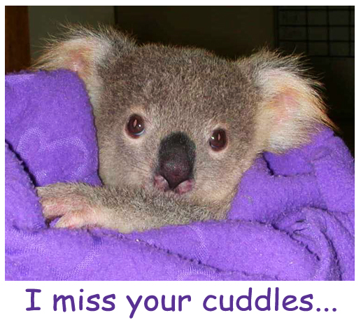 A Cuddly Koala for YOU