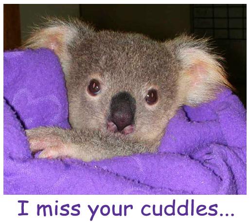 A Cuddly Koala for YOU