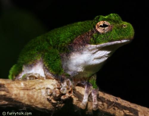 Frog Freak