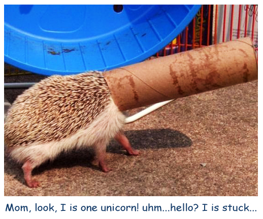 Unicorn Hedgehog