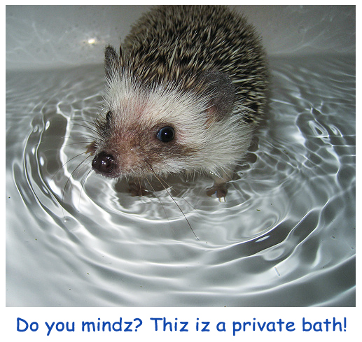 Bathing Hedgehog