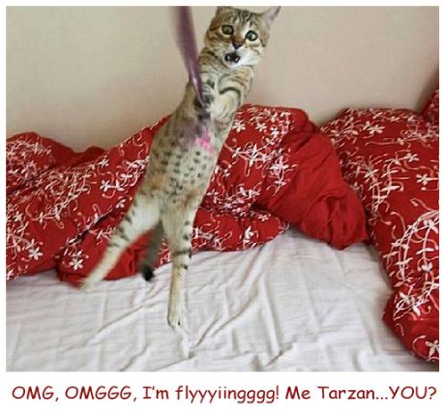 Tarzan Cat