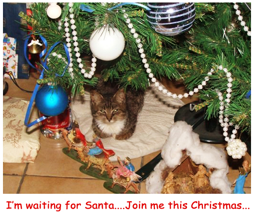 Join Me This Christmas...