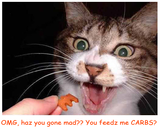 Cat Refuses Meal