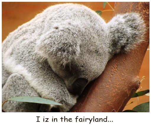 Dreaming Koala