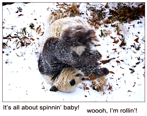 Spinning Panda in the Snow